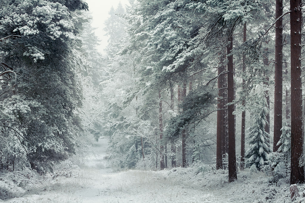 New Forest snow