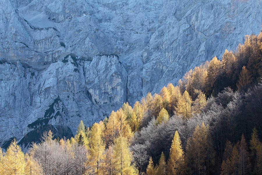 Slovenia Trees