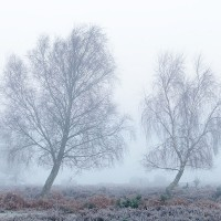 New Forest frost
