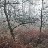 New Forest mist