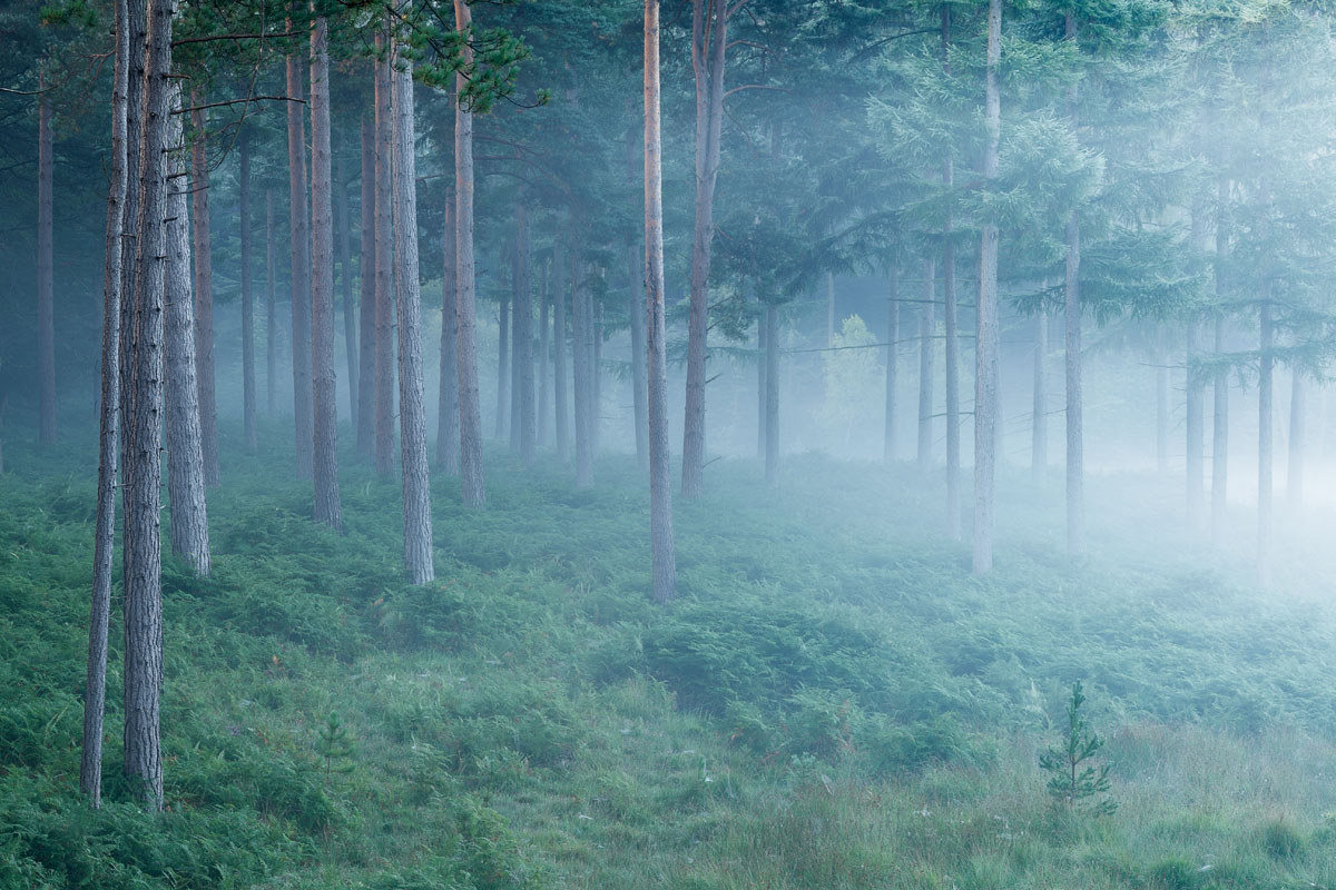 Early Forest