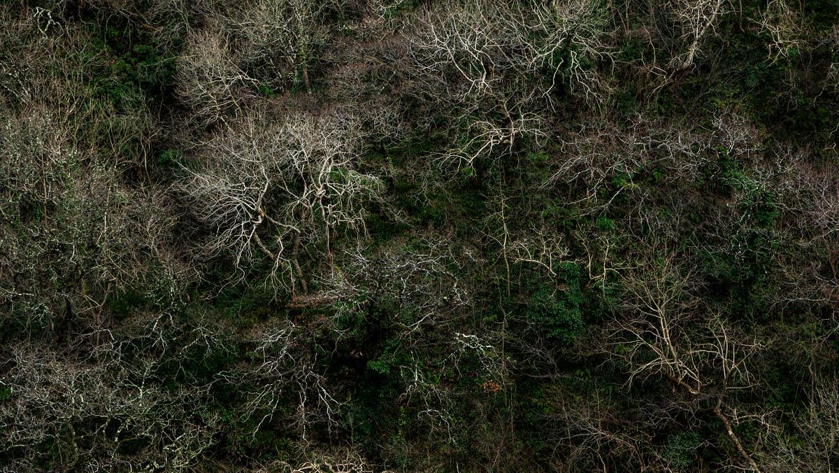 Cilgerran trees