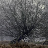Tree fan