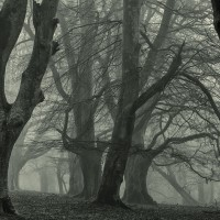 Meeting of trees