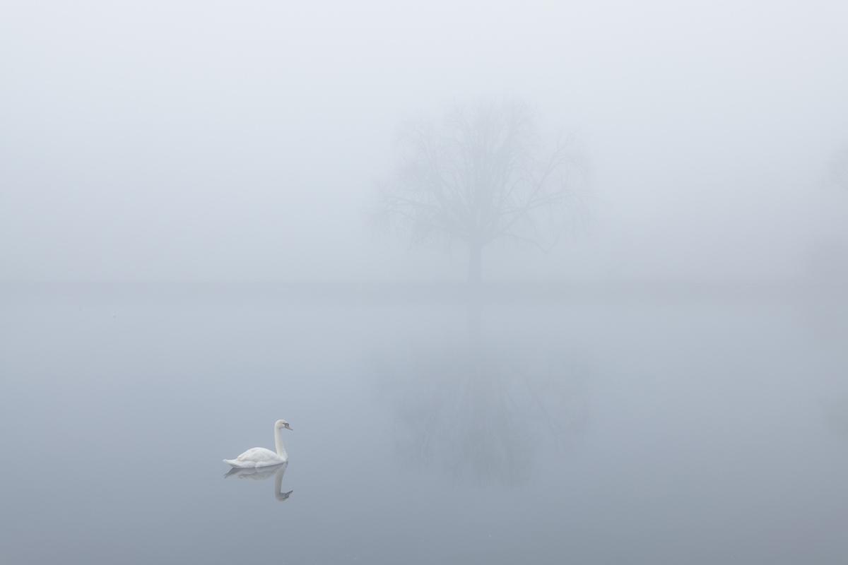 Southampton swan