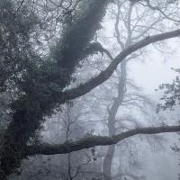 Southampton trees