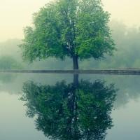 Southampton tree