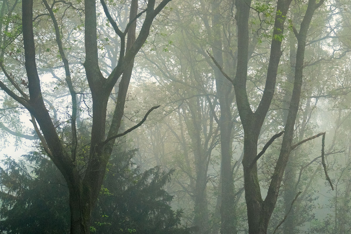 Southampton Common trees