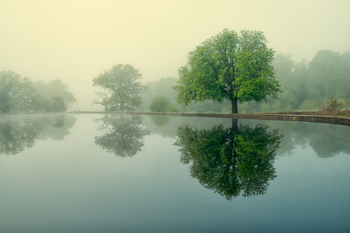 Common reflections
