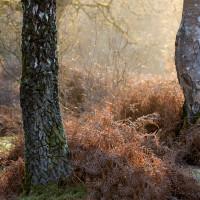 Brinken Wood II