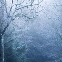 Winter trees II