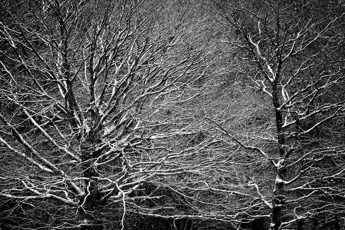 Brinken Wood III