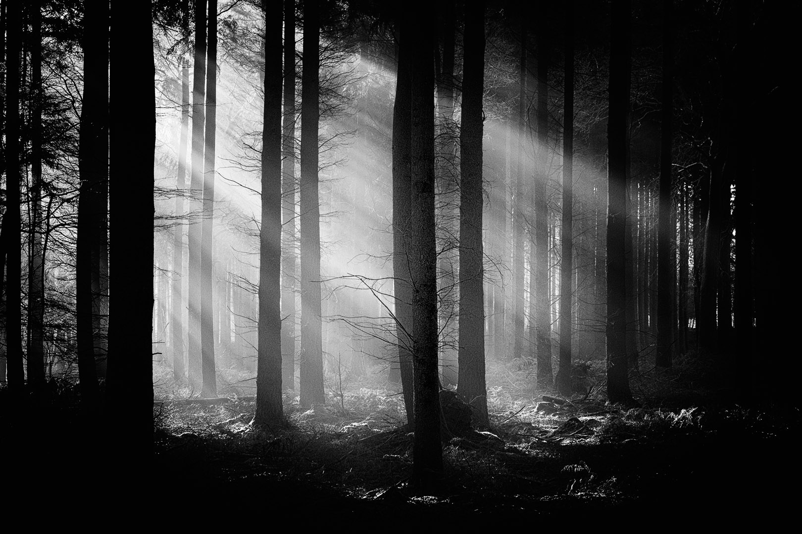 New Forest Light