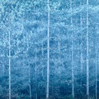 Forest Blue