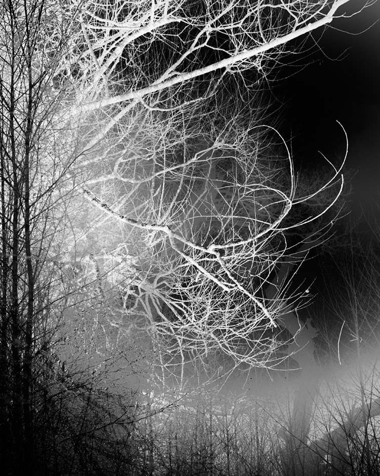Reflected dream