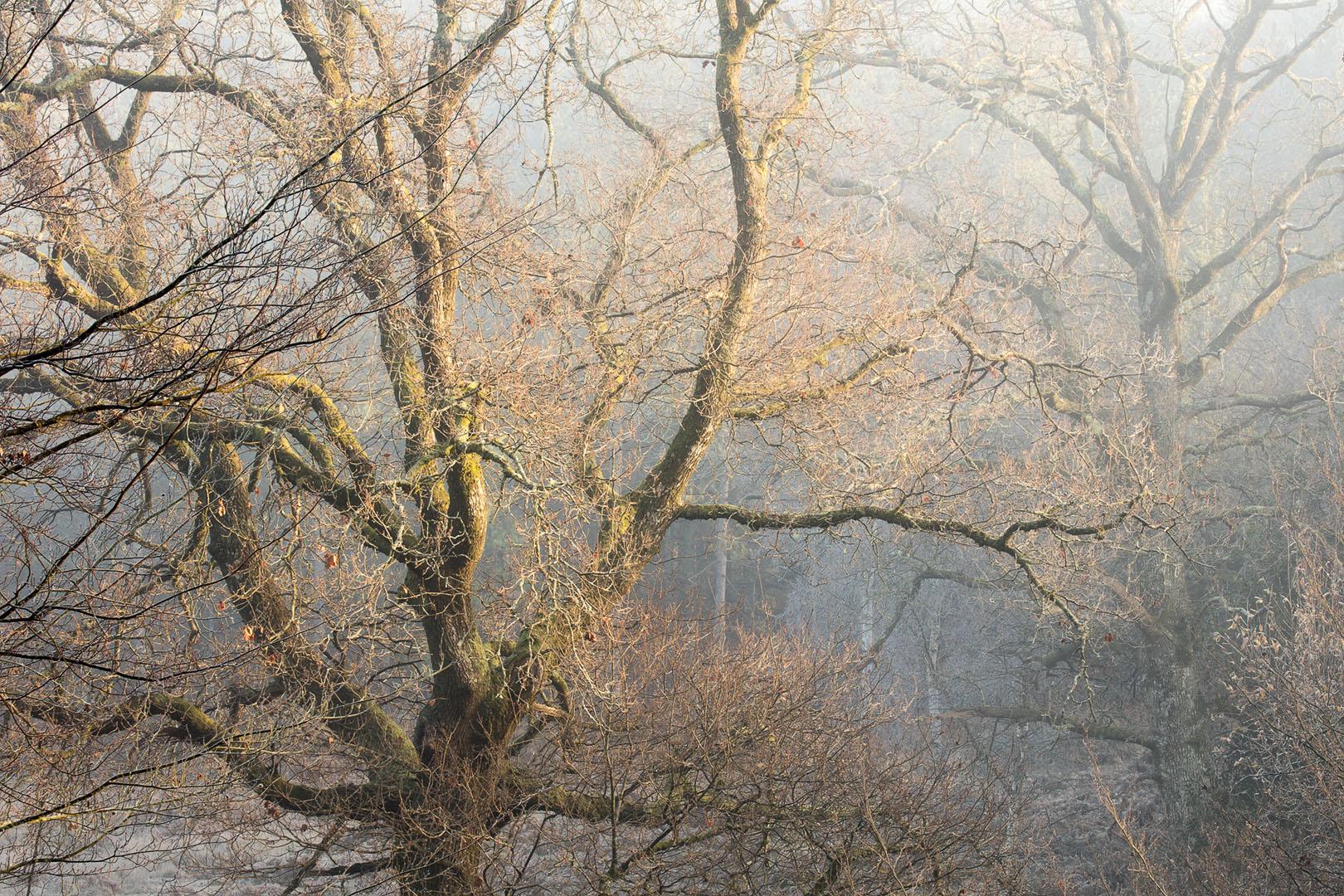 Trees Duo