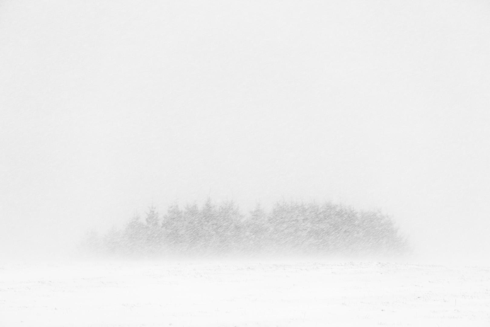 Snow Copse